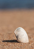 Seashell in the sand and sea Royalty Free Stock Images