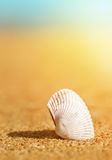 Seashell in the sand and sea Royalty Free Stock Photography