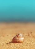 Seashell on the sand and sea Stock Photography