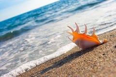 Seashell on the sand of seashore Stock Photos