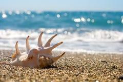 Seashell on the sand of seashore or beach Royalty Free Stock Photography