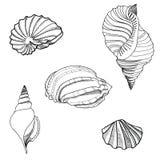 Seashell sand set. Hand drawn stylish summer  Stock Images