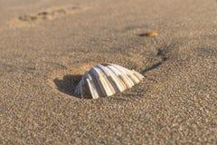 Seashell on sand Stock Photos