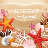 Seashell sand summer background Royalty Free Stock Photos