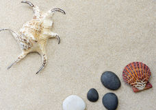 Seashell on the sand. Royalty Free Stock Image