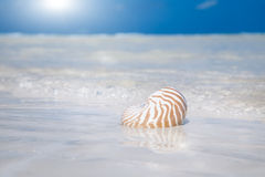 Seashell sand sun and ocean Stock Photo