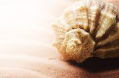 Seashell Stock Photos