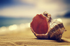 Seashell in the sand Stock Images