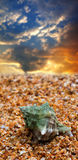 Seashell on sand. And sunset sky at background Stock Photo