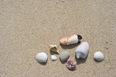 Seashell and sand texture background Stock Photo