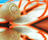 Seashell on Sandals at Beach Stock Image