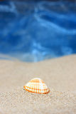 Seashell on sandy beach Royalty Free Stock Photography