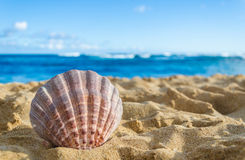 Seashell on the sandy beach background Royalty Free Stock Image