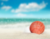 Seashell on the sandy beach Stock Photography