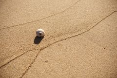 A Seashell on a Sandy Beach (Cape Cod, Massachusetts, USA / November 30, 2013) Stock Photo