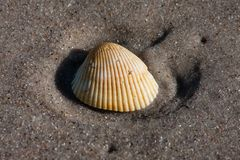 Seashell on the sandy beach royalty free stock photos
