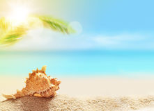 Seashell on the sandy beach and palm Royalty Free Stock Images