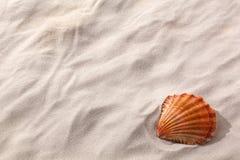 Seashell on a sandy beach Royalty Free Stock Photo