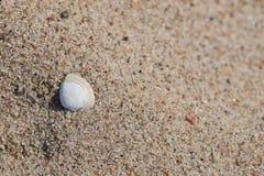 Seashell on sandy beach Royalty Free Stock Photo