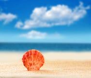 Seashell on a sandy beach. Summer beach. Seashell on a sandy beach. The ocean, the beautiful sky Royalty Free Stock Photos
