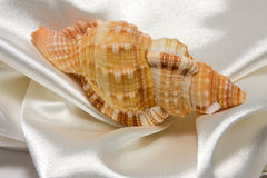 Seashell and satin Royalty Free Stock Photography