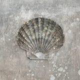 seashell scallop бесплатная иллюстрация