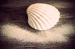 Seashell and scatttered sand Stock Images