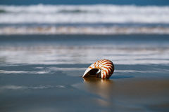 Seashell on sea beach, Agadir ,Marocco Stock Image