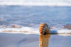 Seashell on sea beach, Agadir ,Marocco Stock Photography