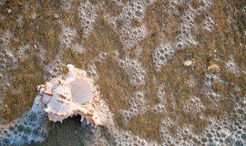 Seashell and sea bubbles Stock Image