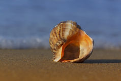 Seashell on sea coast Royalty Free Stock Photography