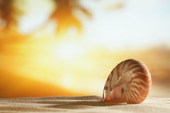 Seashell in the sea and golden sunrise Royalty Free Stock Photos
