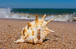 Seashell on sea Royalty Free Stock Photography