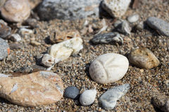 Seashell and sea pebbles as background Stock Image