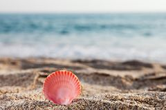 Seashell on sea sand beach Royalty Free Stock Images