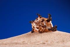 Seashell sea shell on sand deep blue Stock Photos