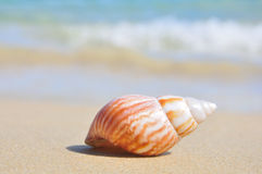 Seashell on the sea shore Stock Image