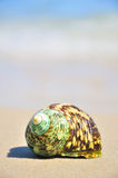 Seashell on the sea shore Royalty Free Stock Photography