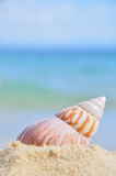 Seashell on the sea shore Royalty Free Stock Image