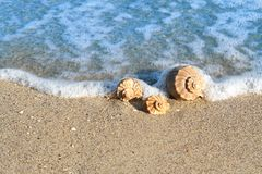Seashell on the seashore Stock Images