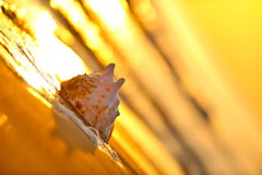 Seashell at seashore Stock Image