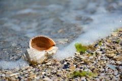 Seashell on the seashore. In summer Stock Image