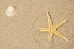 Seashell and seastar Stock Images