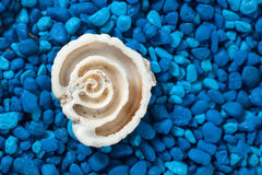 Seashell section closeup on blue background Stock Photos