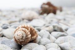Seashell selekcyjna ostrość obrazy royalty free
