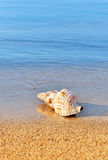 Seashell on serene beach. Picture of a seashell on a serene beach, washed by calm blue waters. Room for text Stock Photo