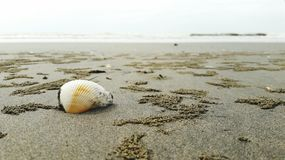Seashell sesides стоковое фото rf