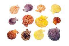 Seashell set. Royalty Free Stock Photography