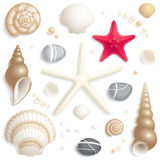 Seashell set Royalty Free Stock Photo