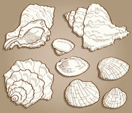 Seashell set in vintage style Stock Image